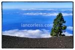 iancorless.comP1040729