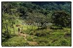 iancorless.comP1050601