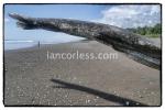 iancorless.comP1050938