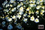 ©iancorless.com.S0471305Transvulcania14