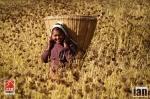 ©iancorless.com_Nepal2014-0238