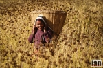 ©iancorless.com_Nepal2014-0238#ETRkathmandu