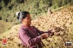 ©iancorless.com_Nepal2014-0333