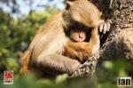 ©iancorless.com_Nepal2014-7776