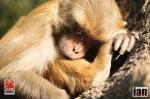 ©iancorless.com_Nepal2014-7780