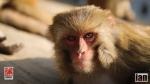 ©iancorless.com_Nepal2014-7785