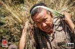 ©iancorless.com_Nepal2014-8711
