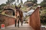 ©iancorless.com_Nepal2014_7-1621