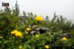 ©iancorless.com_Tromso2015-6782