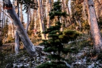 ©iancorless.com_Rut2015-6910