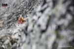 ©iancorless.com_Tromso2016-7573